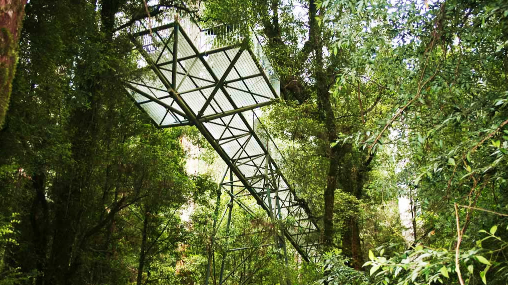 Warburton-Rainforest-Gallery