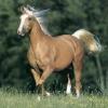 A palomino horse.