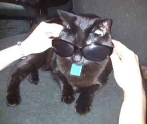 My cat Keli wearing sunglasses.