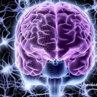 Proteina EGFL7 contro sclerosi impedisce a cellule immunitarie di entrare nel cervello
