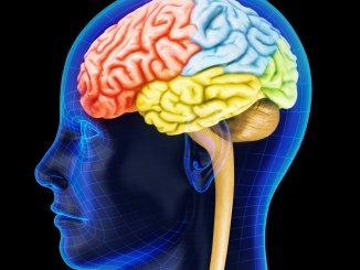 Scoperta proteina che causa Parkinsonsi tratta della Sinapsina 3