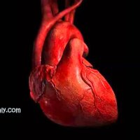 Resolvina D1 molecola lipidica responsabile insufficienza cardiaca, la scoperta italiana