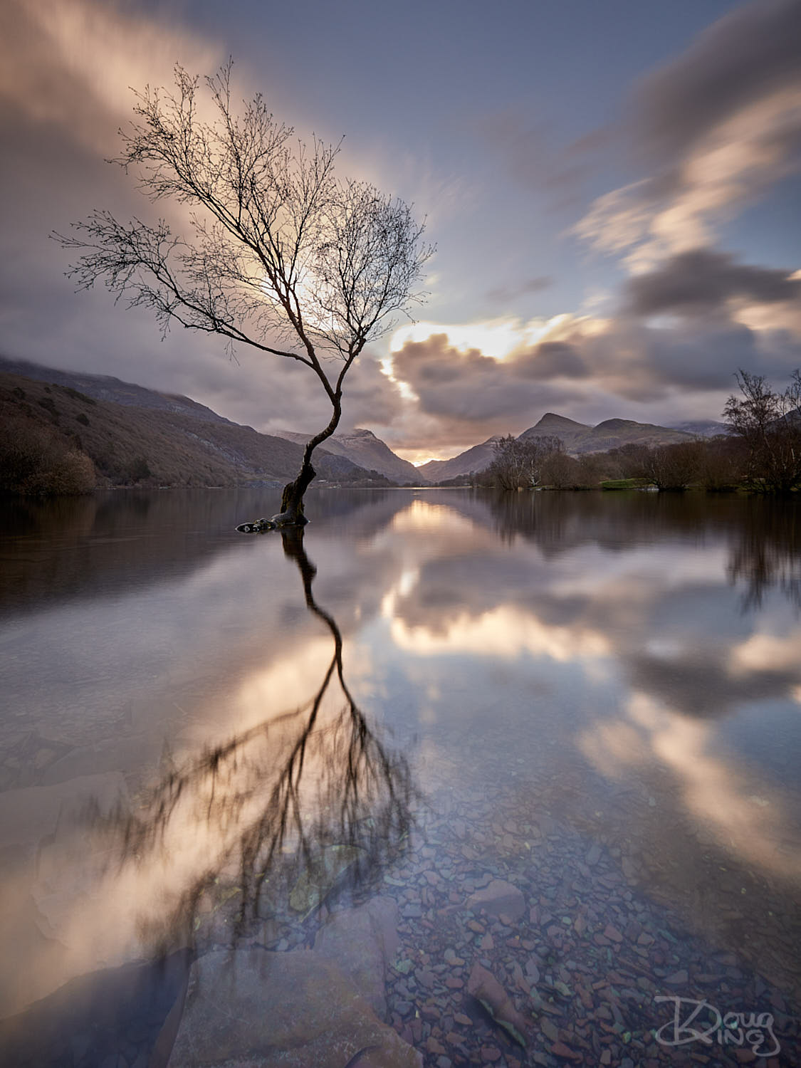 The Lonely Tree of Padarn