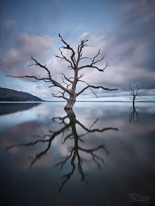 Skeleton trees in flooded salt marsh