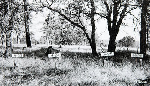 Negro Hill Cemetery before being flooded by Folsom Lake - 1950s