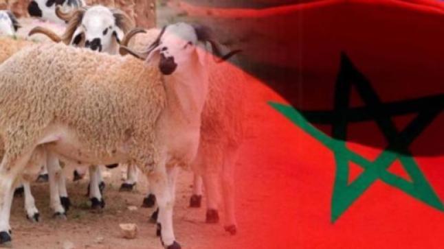 بالمغرب …فاتح ذي الحجة بعد غد الاثنين و عيد الاضحى يوم الأربعاء 21 يوليوز