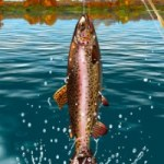 Download Carp Fishing Simulator APK unlimited money v1.9.9.4 Android 2018