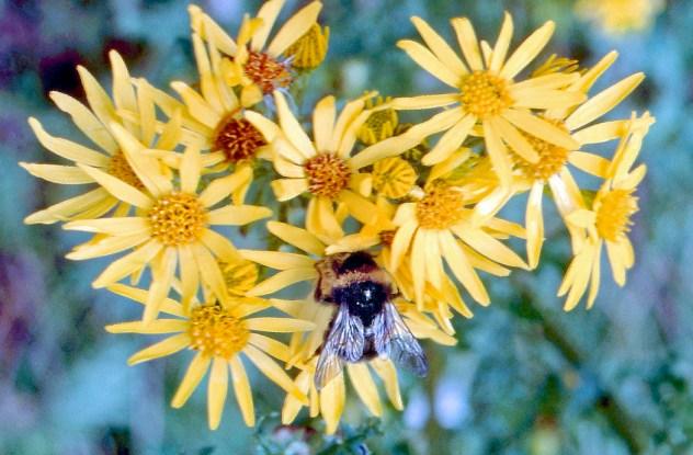 Bee on plant_edited 2 WEB