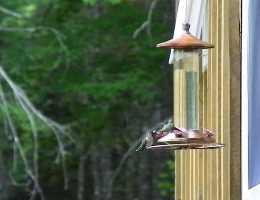 Two humming birds feeding