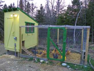 Floodlights Outside Chicken Coop