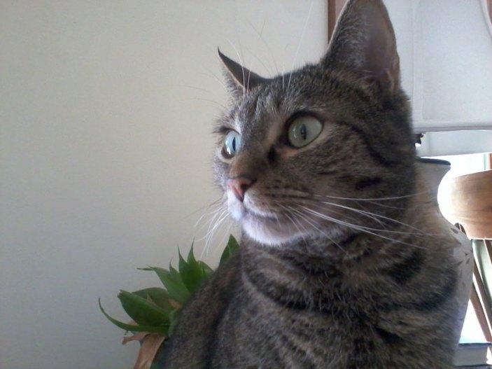Cinder, AKA Miss Kitty (SJB)