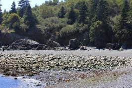 Hannah on the rocky beach