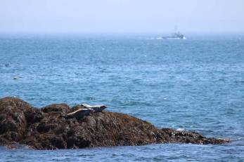 Two seals on the rocks