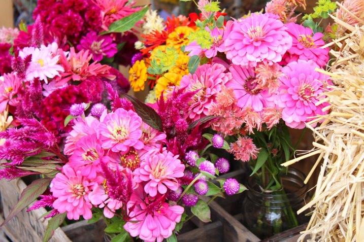 Amazing pinks