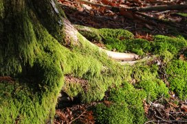 moss on tree roots