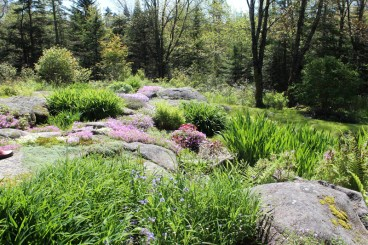 The area behind the house is full of rock and boulders. The crevices in between hold everything from creepying thyme to pansies and tulips.