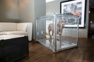 Extra Large Heavy Duty Dog Crates Collapsible Steel