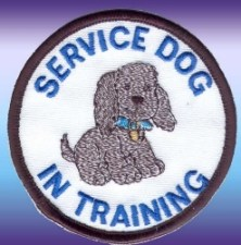 service-dog-in-training