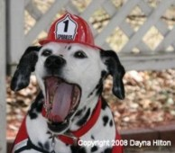 Sparkles the Fire Dog