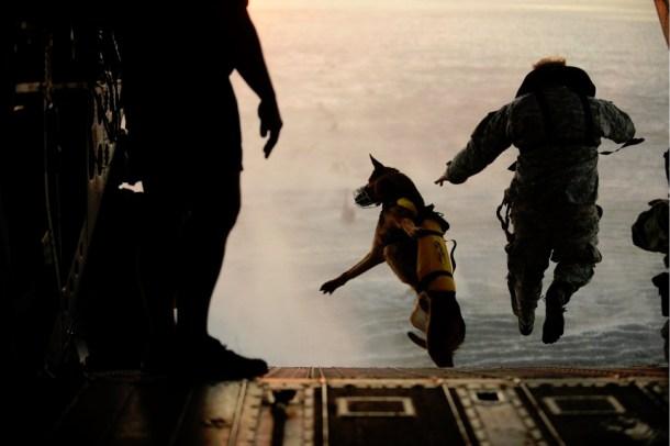 K9 War Dog Jumps Airborne