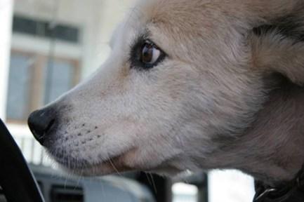 Ralphie-tornado joplin dog