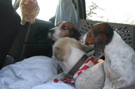 Joplin rescue dogs and a rescue cat.