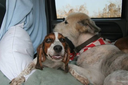 2 Joplin Tornado Rescue Dogs