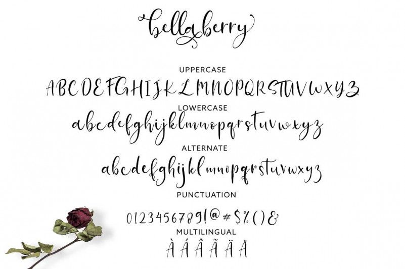 bellaberry-script-font-2