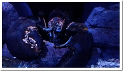 Ripley's Aquarium of Canada Wordless Wednesday DownshiftingPRO_5