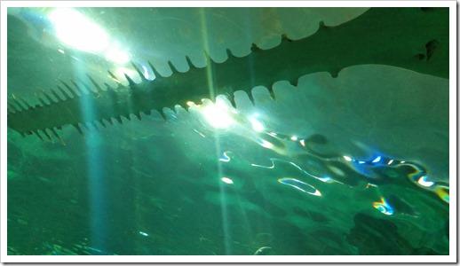 Ripley's Aquarium of Canada Wordless Wednesday DownshiftingPRO_9