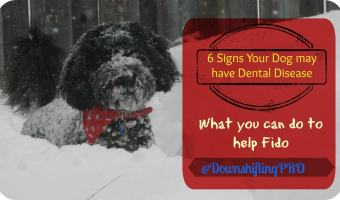 6 Signs Your Dog May have Dental Disease – Royal Canin Prize Pack Giveaway #DentalPetFactsContest