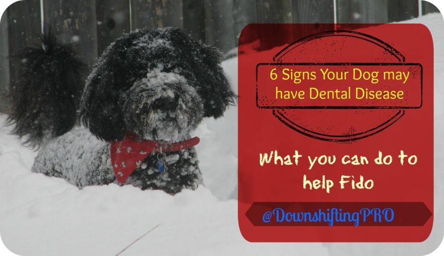 Royal Canin Dental Health @DownshiftingPRO