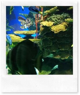 Ripley's Aquarium Canada @DownshiftingPRO March Break