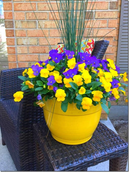 Pansies-Summer Planters @DownshiftingPRO