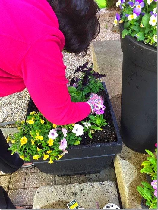 Planting-Summer Planters @DownshiftingPRO