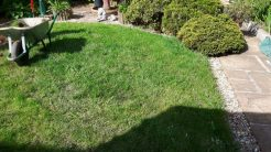This is the lawn that we removed, and replaced with gravel to create a low maintenance garden.