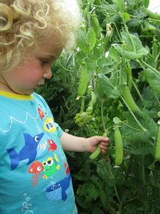 boy and pea plants