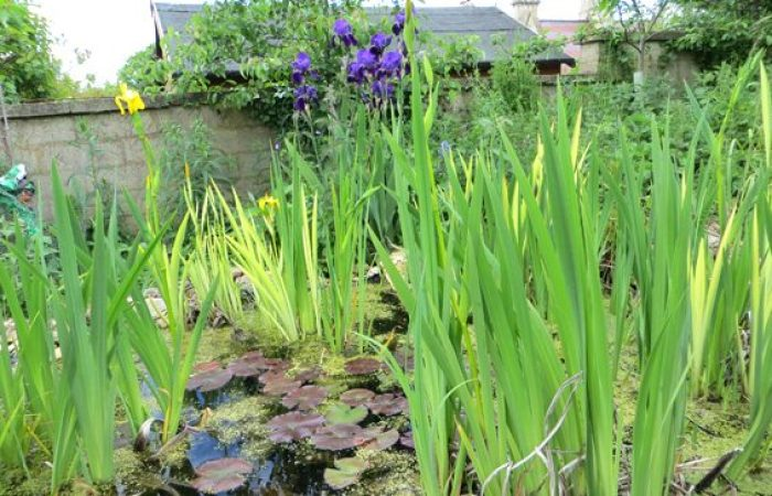 The new pond at Selsley Community Growing Scheme