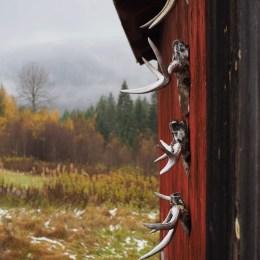 The Hunt (Elgjakten) - Moose Hunting in Norway