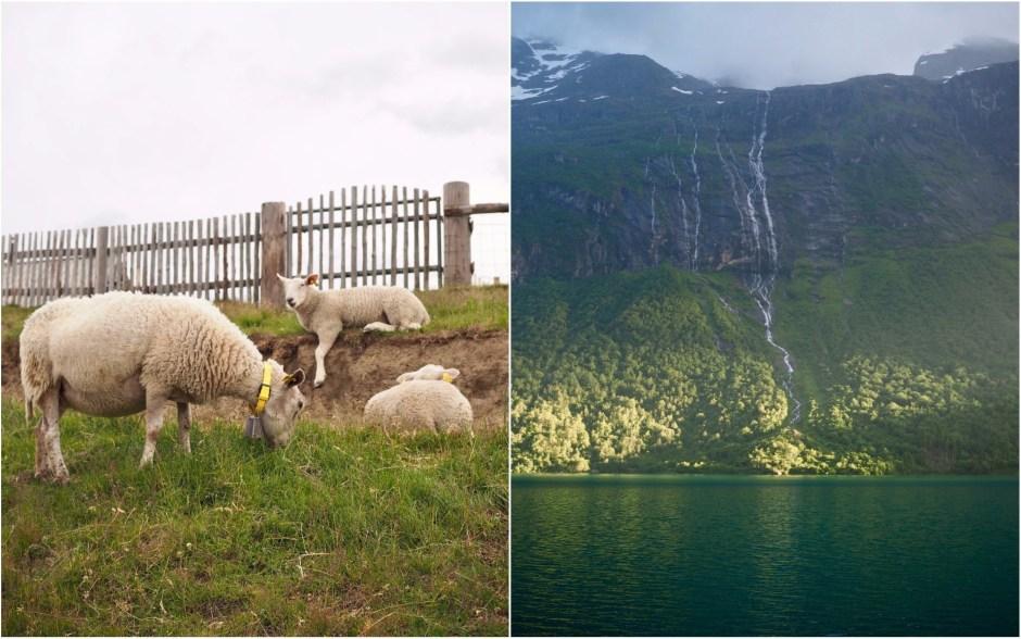 The Waters + Norwegian Fish Cakes (Fiskekaker)