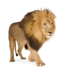 Bernard Coeur de Lion