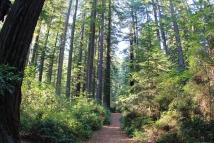 Lady Bird Trail