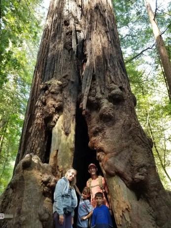 national park junior ranger muir woods