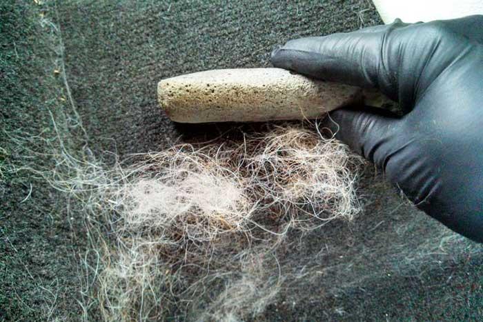 comment nettoyer les poils de chien