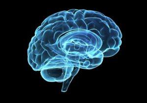 The Brain is Hard-Wired for God:大脳は神を求めるように設計されている