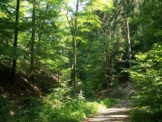 Valle Einsiedlertal, Siebengebirge, Bad Honnef