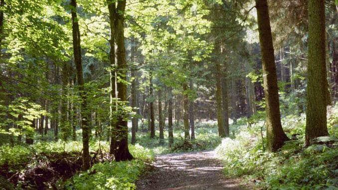 Al sendero alrededor del Lohrberg, Siebengebirge, Königswinter
