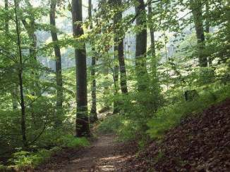 Bosque natural al Nonnenstromberg, Siebengebirge, Königswinter