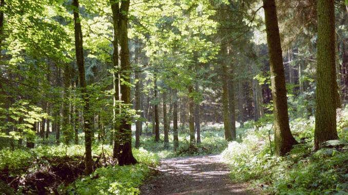 Au sentier autour du Mont Lohrberg, Siebengebirge
