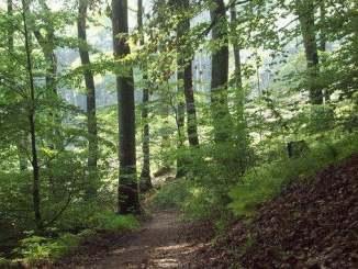 Forêts naturelles au Nonnenstromberg, Siebengebirge, Königswinter